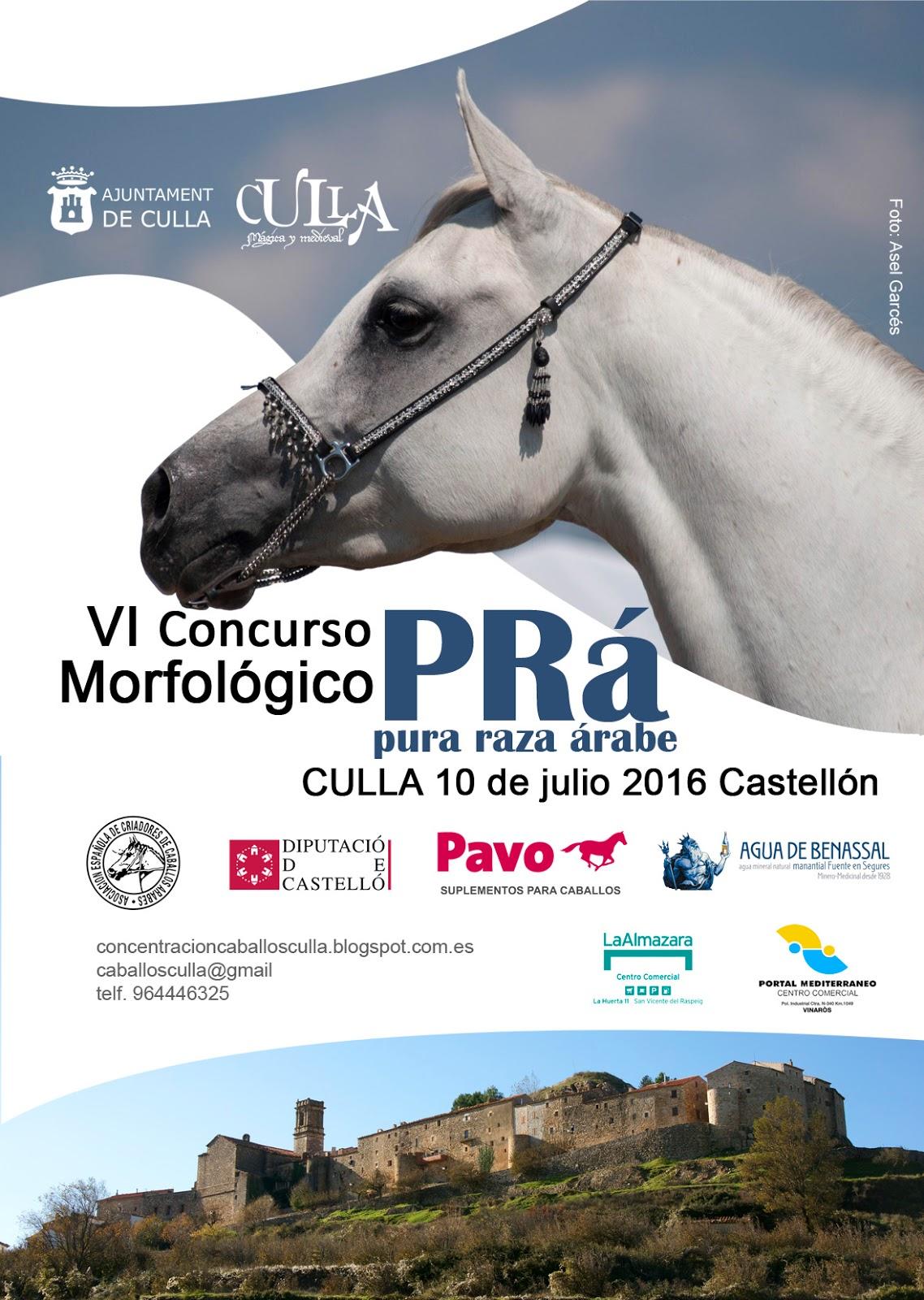 caballos arabes en Culla 2016