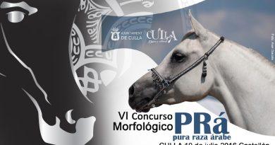 caballos arabes en Culla arabigan