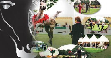 scandinavian championship arabian horses