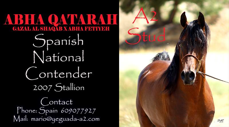 abha-qatarah