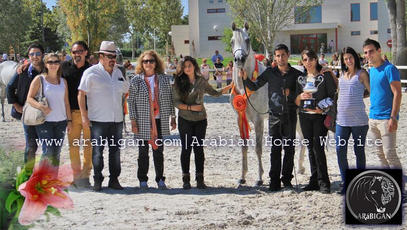 cnosos-campeon-de-espana-2016-caballo-arabe-arabigan