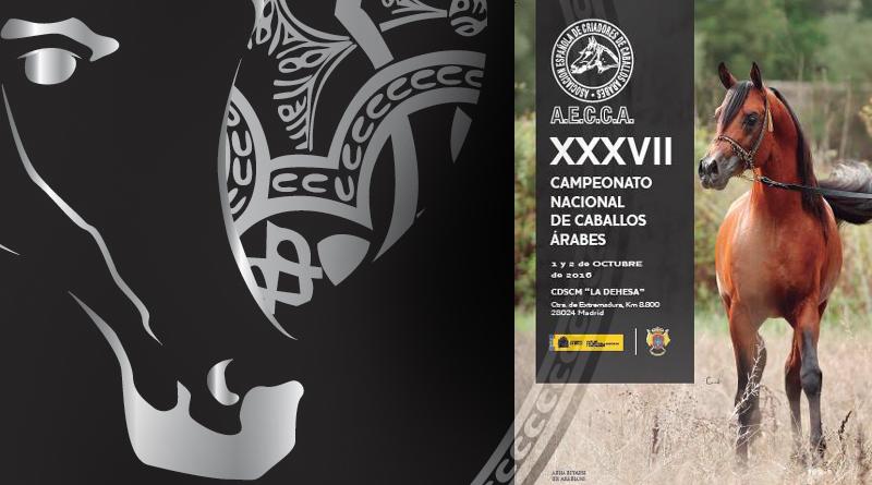 campeonato-de-espana-de-caballos-arabes-2016