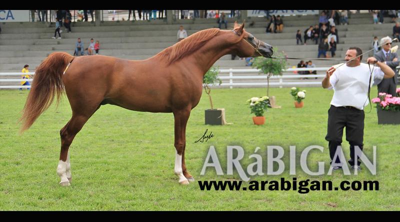ainhoa-saadeen-campeonato-europa-caballos-arabes