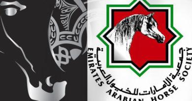 campeonato-de-caballos-arabes-en-ajman