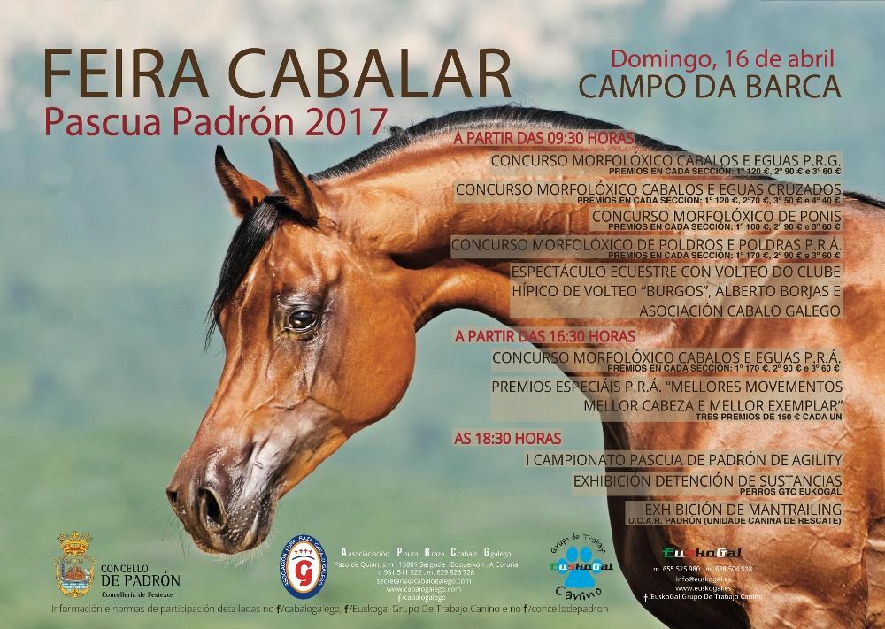 caballos árabes en Padrón