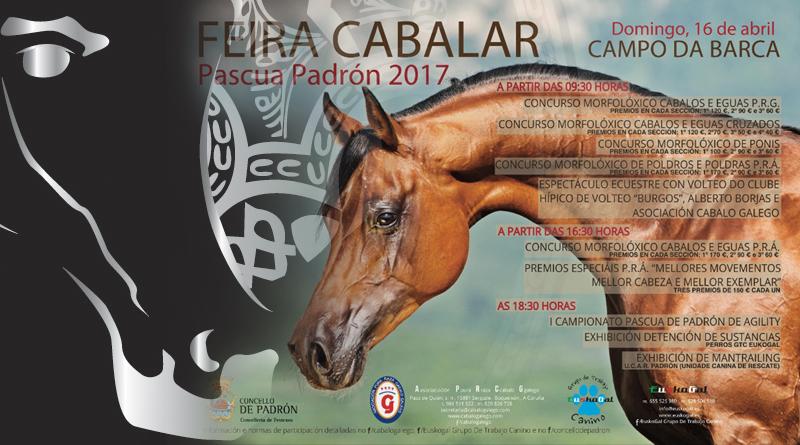 caballos árabes en Padrón La Coruña