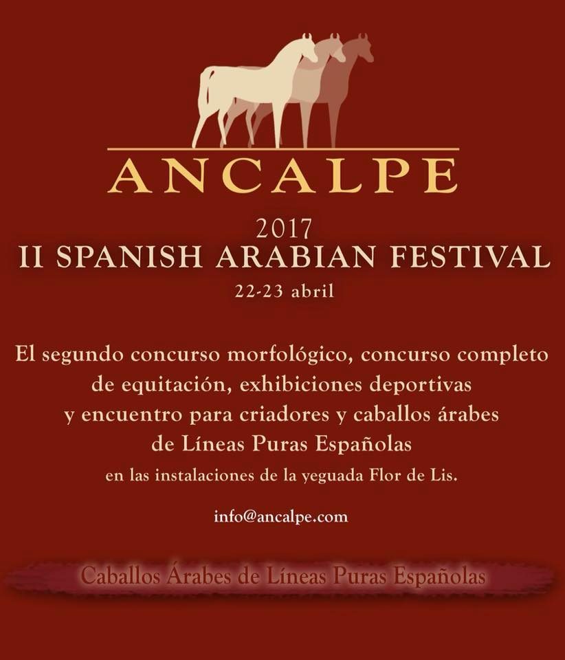 caballos arabes ancalpe pure spanish arabian horses
