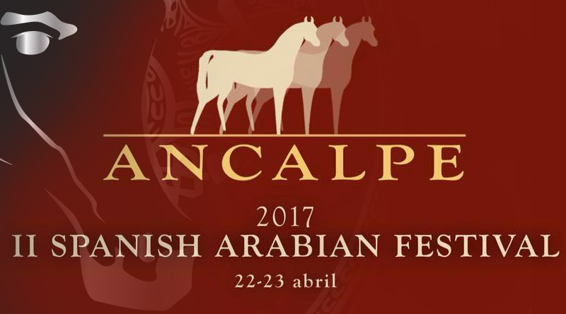 caballos arabes en el festival ancalpe