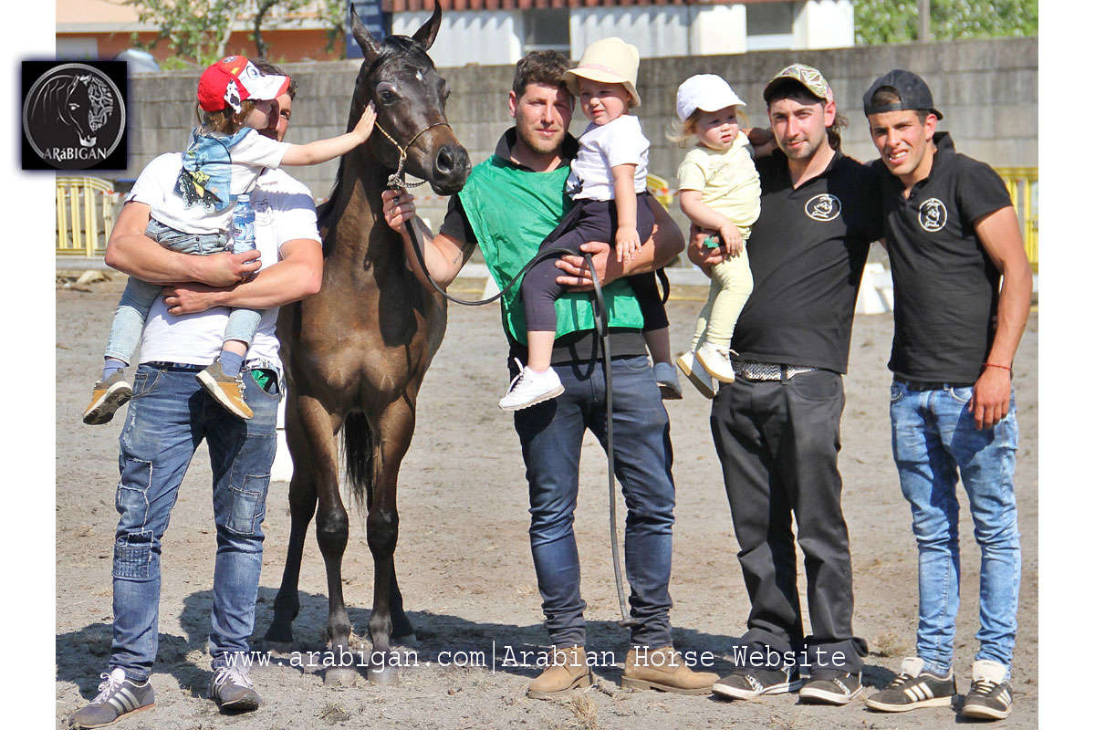 campeon de potros arabes A Estrada 2017