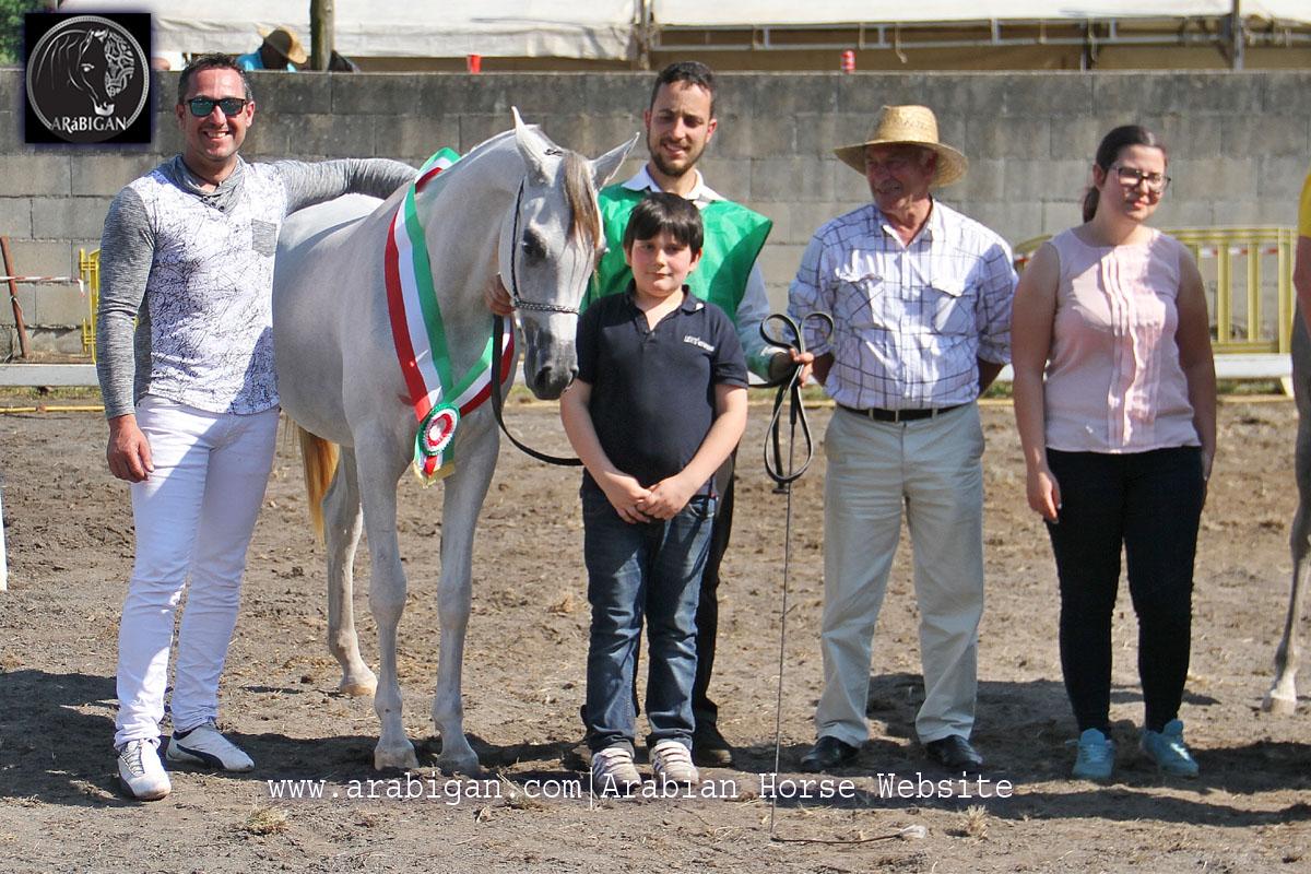 campeona de potras arabes A Estrada 2017