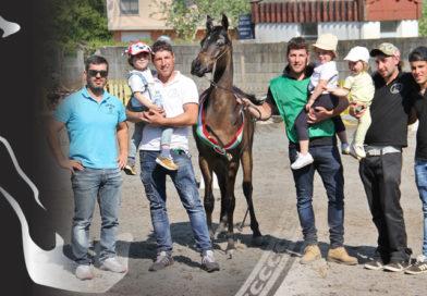 Resultados del show de caballos árabes de A Estrada