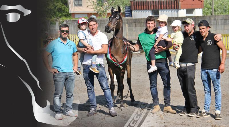 concurso de caballos arabes de A Estrada portada