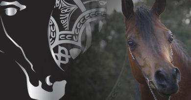 morfologico caballos arabes a estrada pontevedra