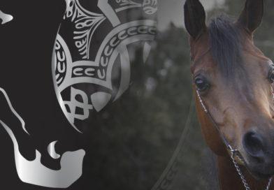 Morfológico de caballos árabes de A Estrada, Pontevedra