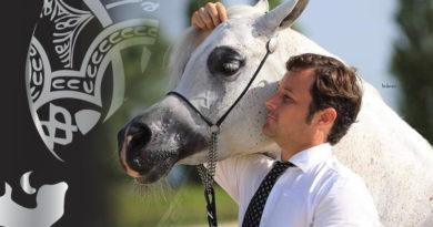 curso de presentacion de caballos arabes galicia