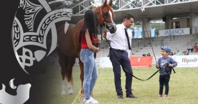 fotografias del morfológico de caballo árabes de Silleda