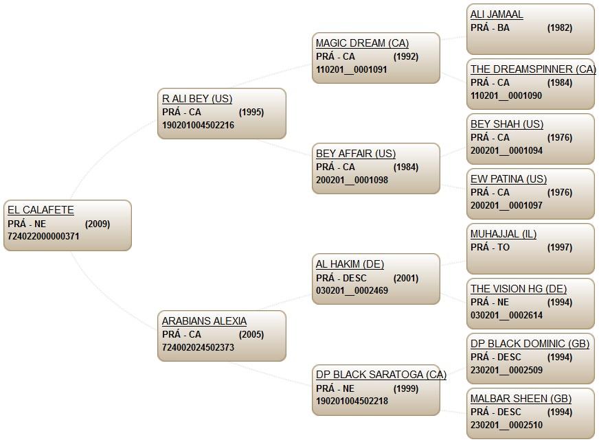genealogía calafate