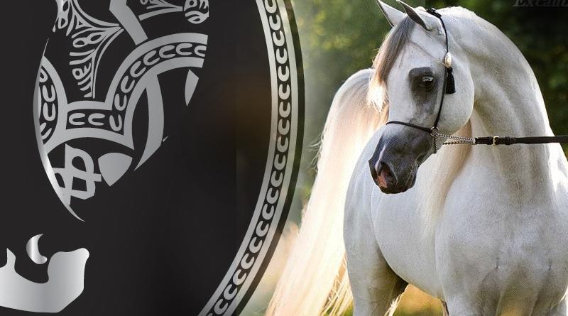 show de Aachen caballos arabes all nations cup