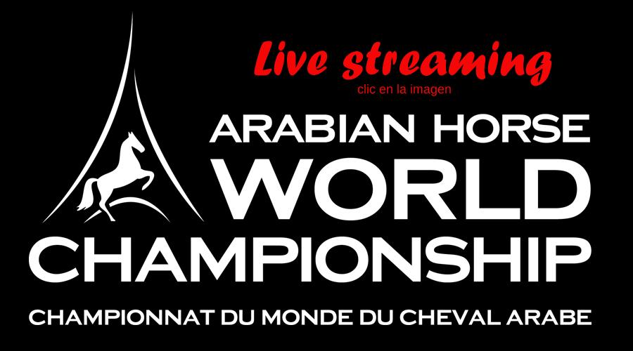 campeonato del mundo de caballos árabes en directo