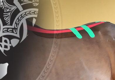 bandas elasticas en fisioterapia de caballos
