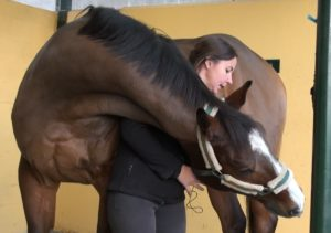 estiramientos en fisioterapia de caballos