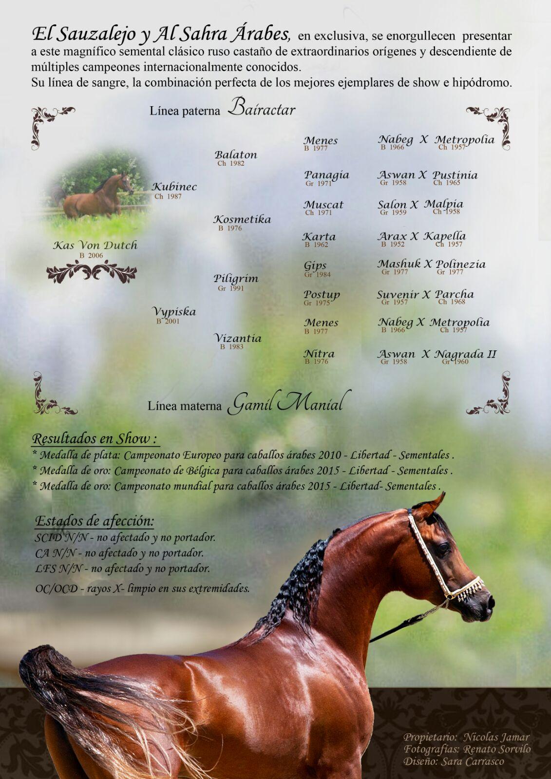 Arabian stallion 2018 breed available