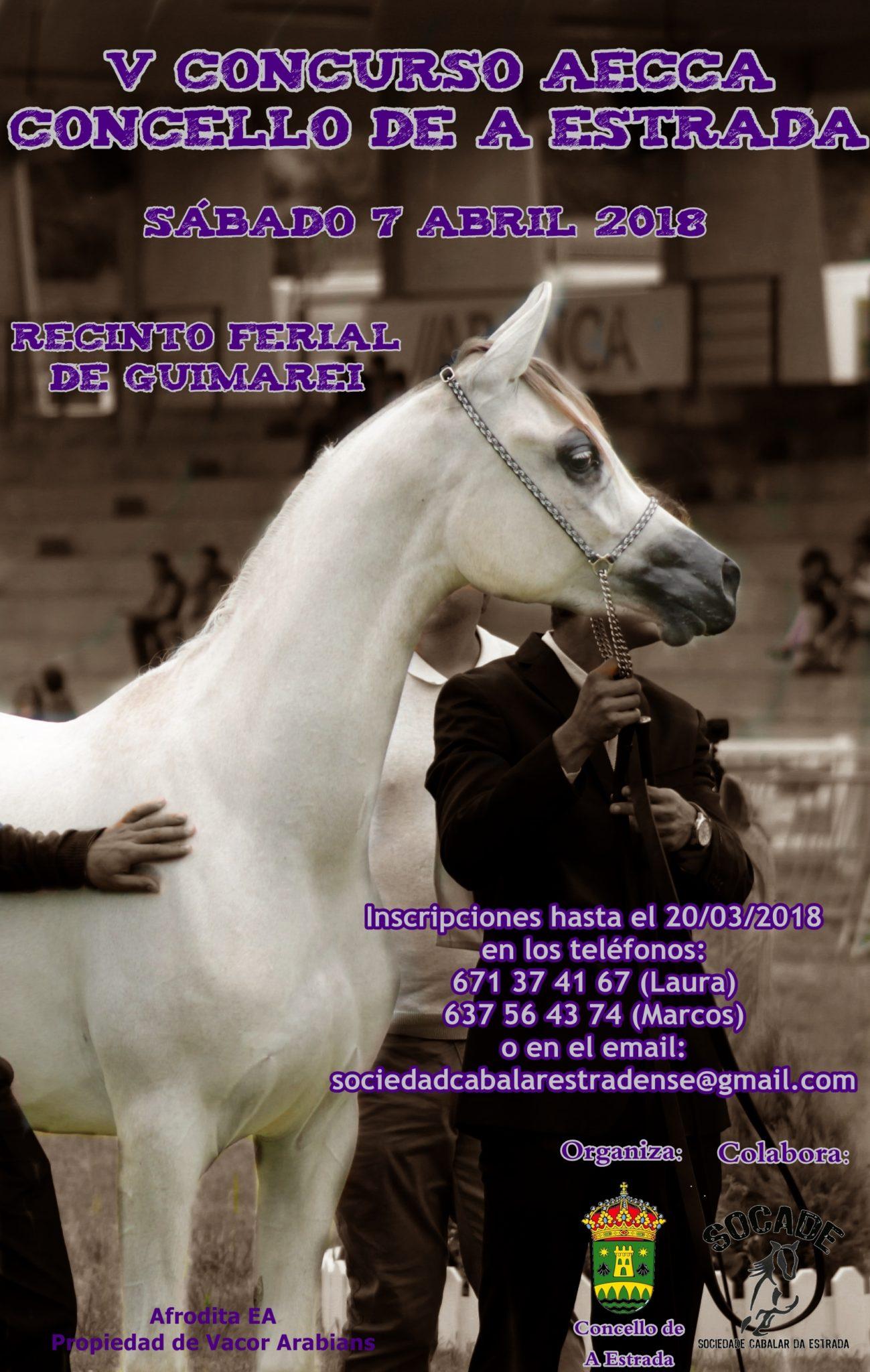 morfologico de caballos arabes de A Estrada