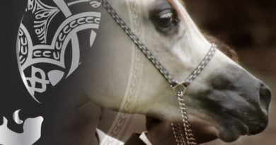 show de caballos arabes a estrada