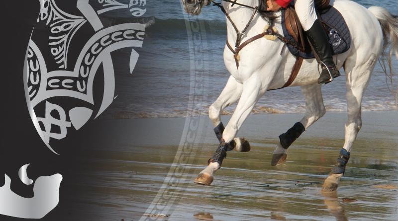 belleza y funcionalidad en el caballo arabe