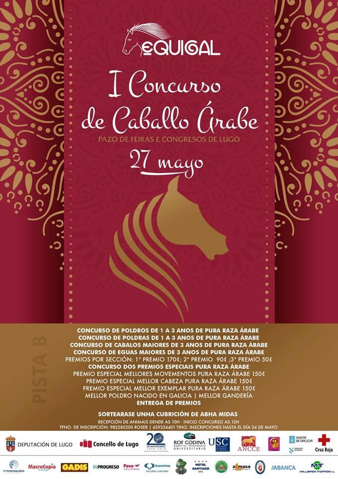 concurso de caballos arabes de Equigal