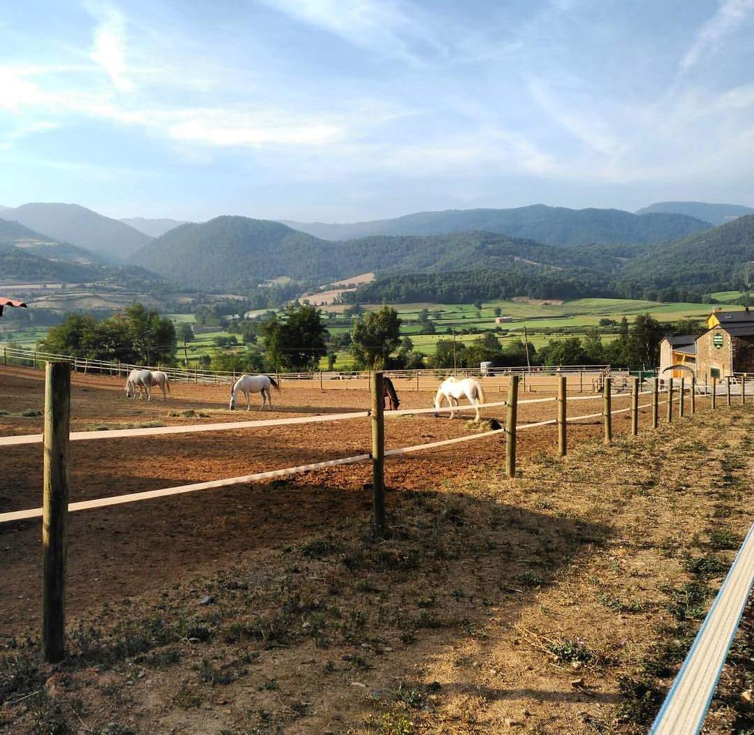 zona al aire libre para caballos