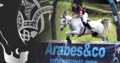 caballos arabes arabesco 2019